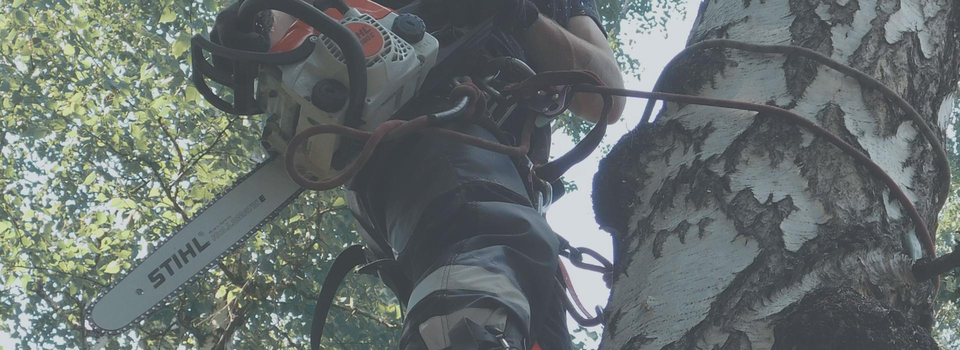 Спил деревьев без автовышки