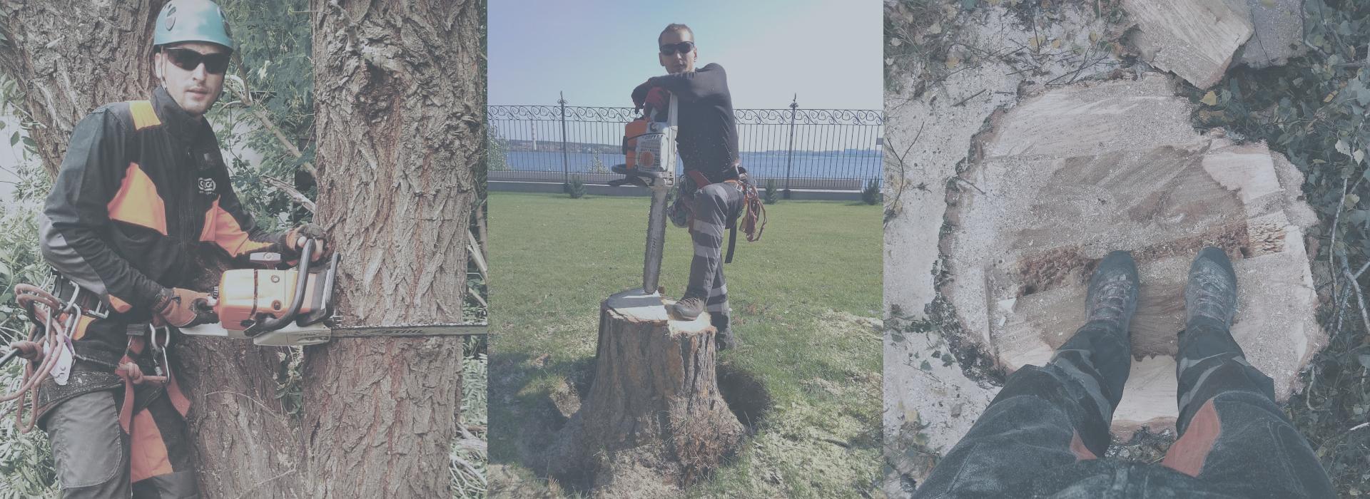 Спил деревьев в Новосибирске